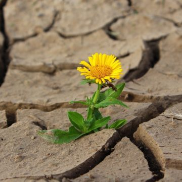 Apr 06: We've Got This,  Resiliency in Today's World